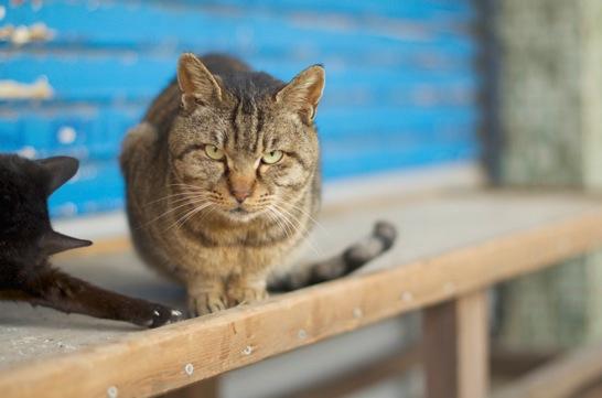 東尋坊タワーのふもとにいた猫