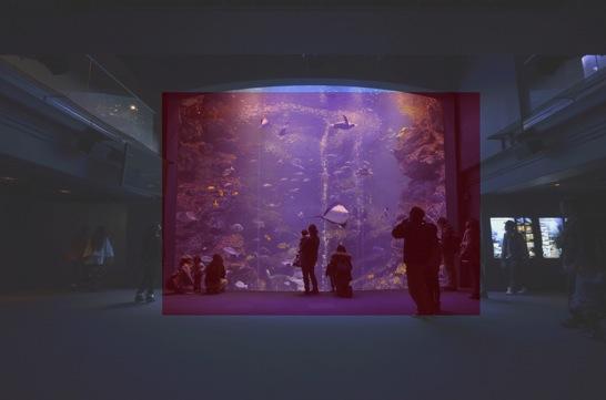 額縁構図で京都水族館の水槽を撮影