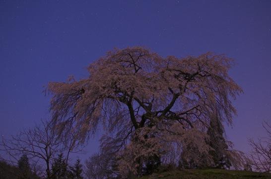 与一野のしだれ桜 比較明合成