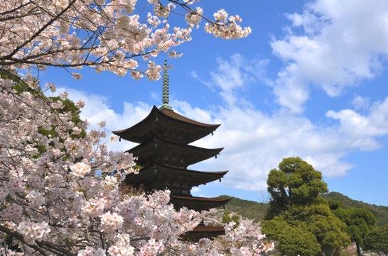 瑠璃光寺の桜