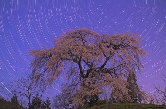 与一野のしだれ桜と北天