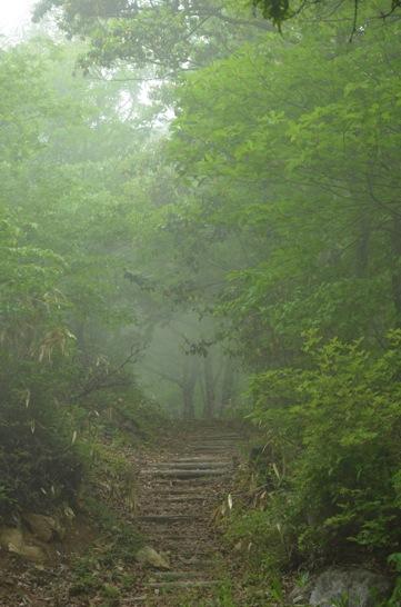霧の龍頭山