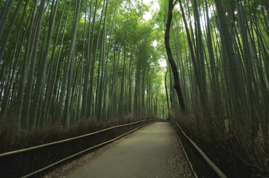 嵐山嵯峨野の竹林の小径