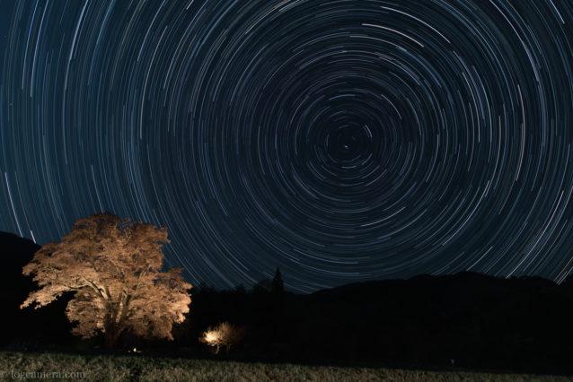 千鳥別尺のヤマザクラ 星グル