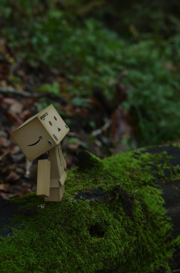 苔むした森とダンボー