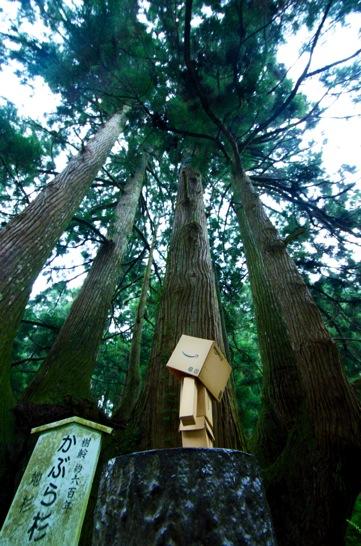 かぶら杉とダンボー