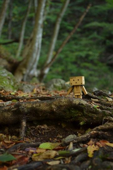 森のなかのダンボー