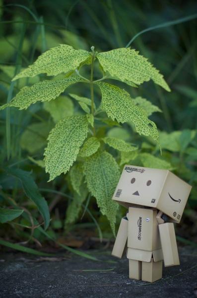 ダンボーと緑の葉っぱ