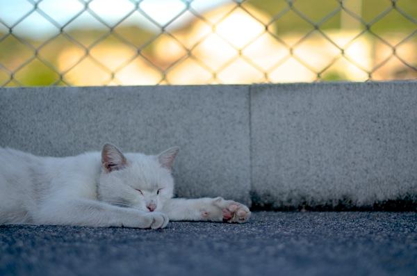 水島コンビナート近くの猫