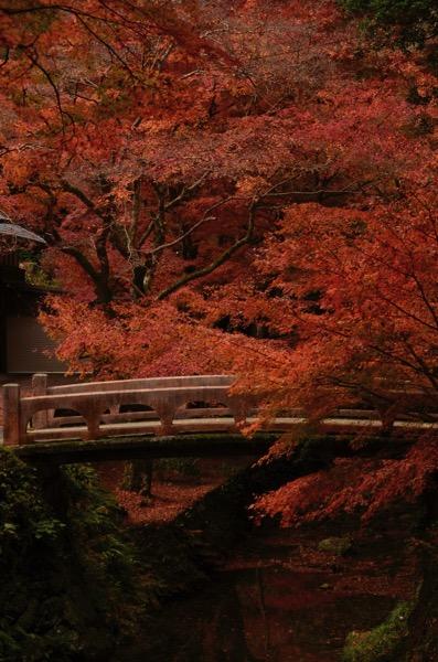 鰐淵寺の橋と紅葉