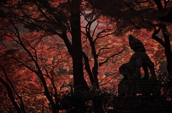 鰐淵寺の紅葉と狛犬
