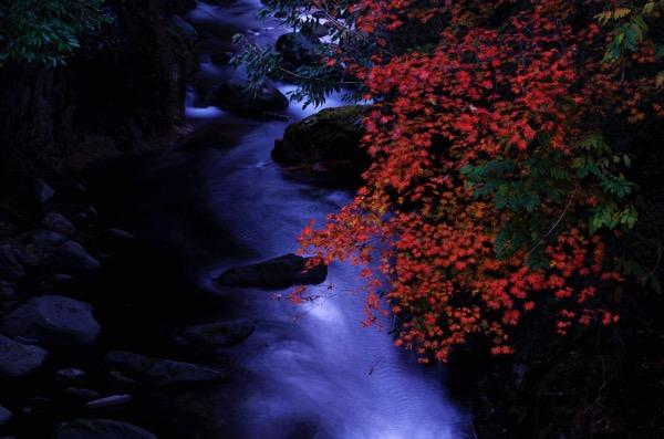 匹見峡の紅葉