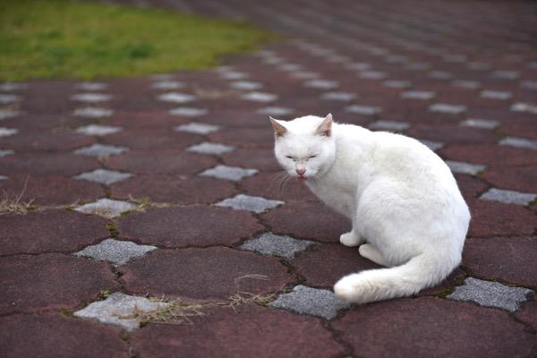 てへぺろな猫