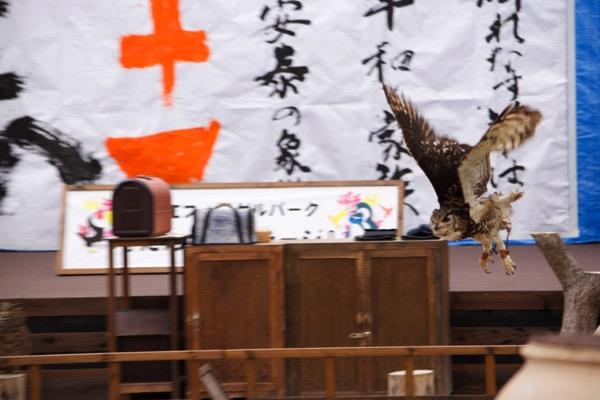 フクロウの飛行ショー フォーゲルパーク