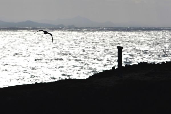 経島とウミネコ