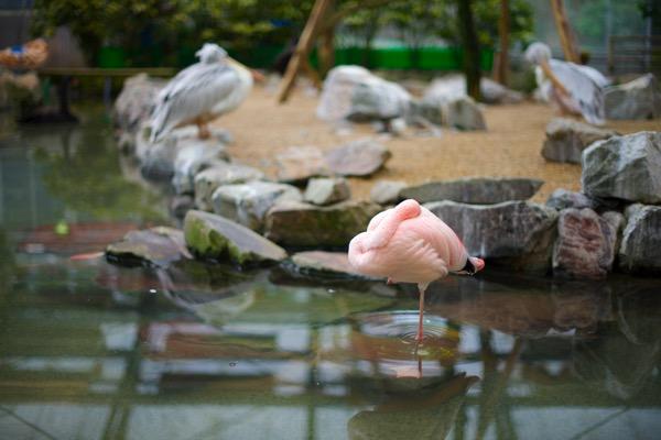 フォーゲルパーク フラミンゴ