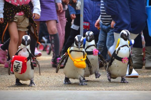 フォーゲルパーク ランドセル ペンギン