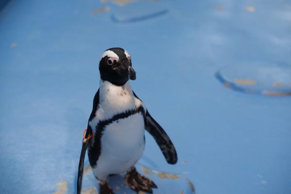 フォーゲルパーク ペンギン