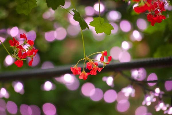 フォーゲルパークの花