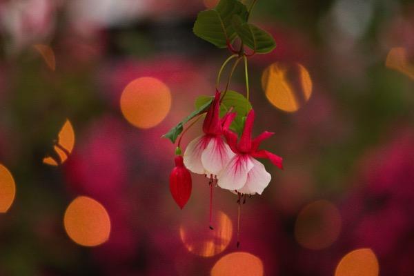 フォーゲルパークの花々