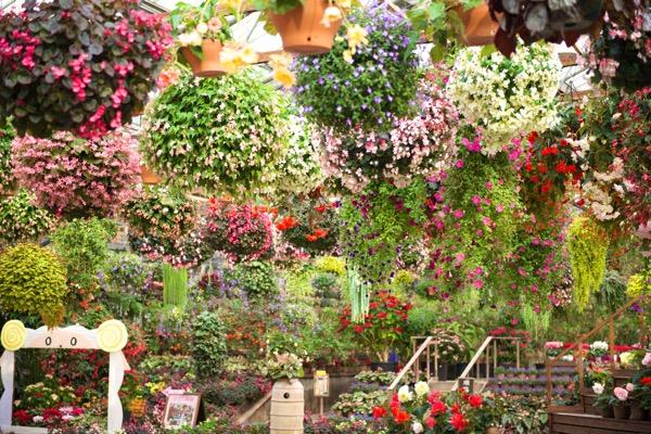 松江フォーゲルパークの花