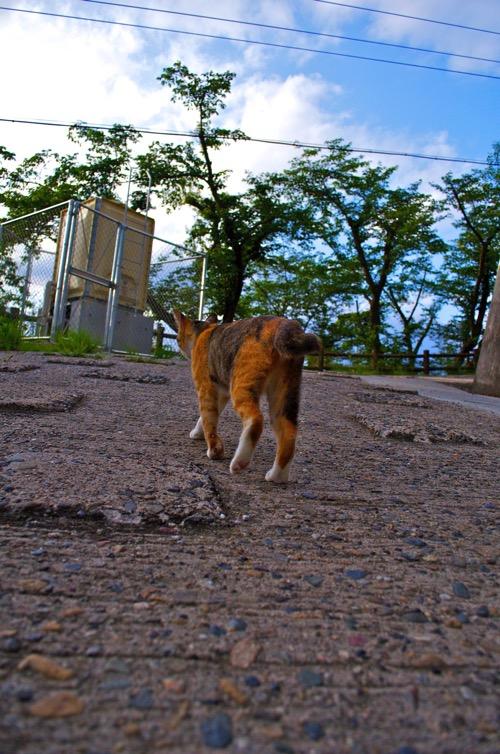 ネコ ローアングル
