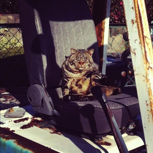 ネコ シャッターチャンス