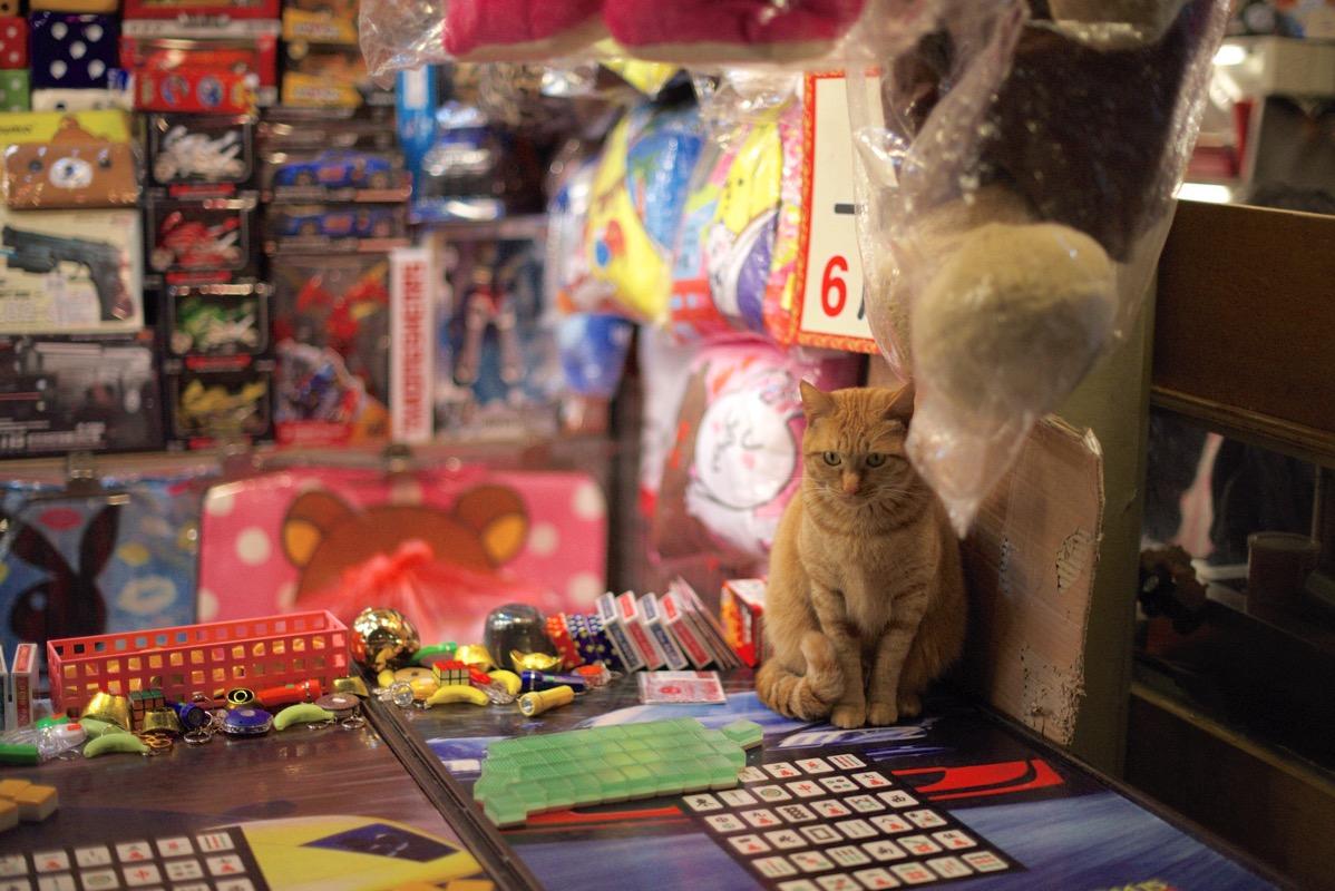士林夜市 ネコの店番