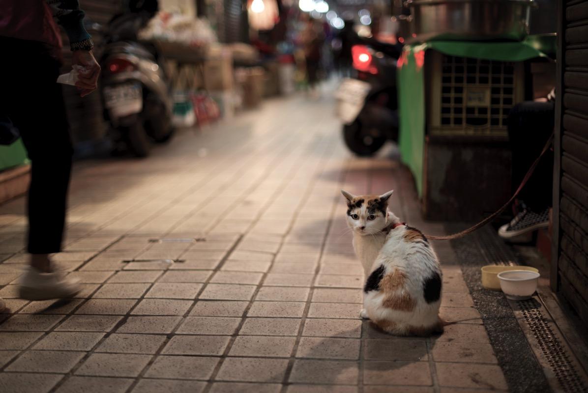 東三水街市場のネコ