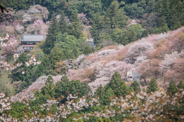 吉野山バス