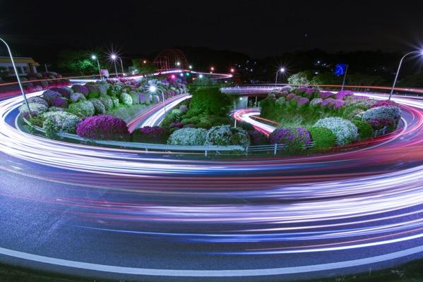 音戸の瀬戸公園 ツツジ テールランプ