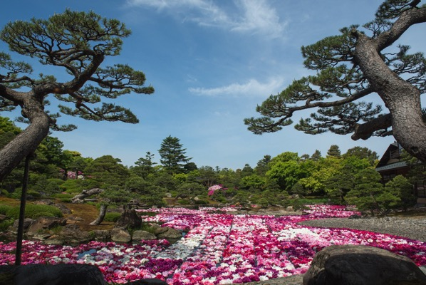 茶房「一望」から眺める由志園の牡丹