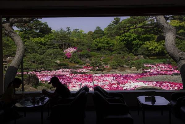 茶房「一望」から眺める牡丹