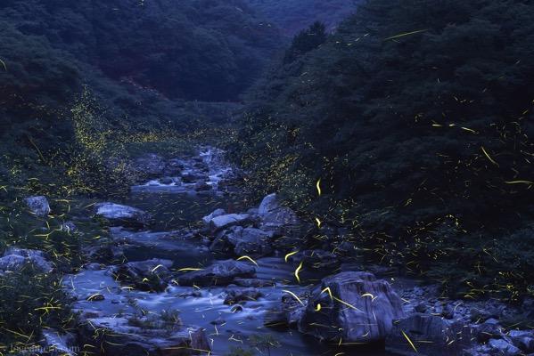 渓流とホタル