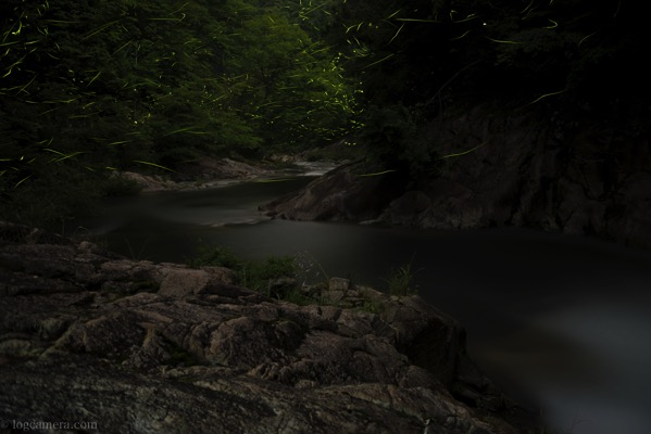 渓流とゲンジボタル
