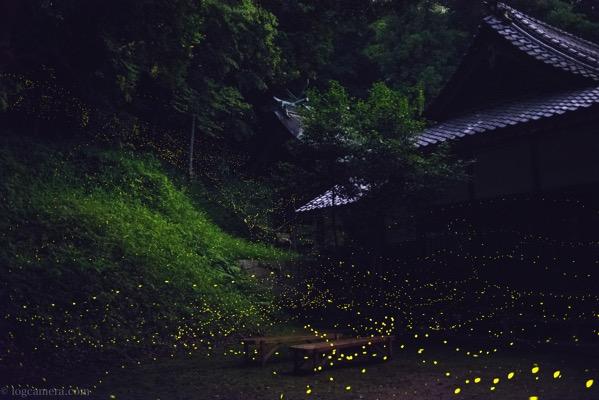 ヒメボタルと神社