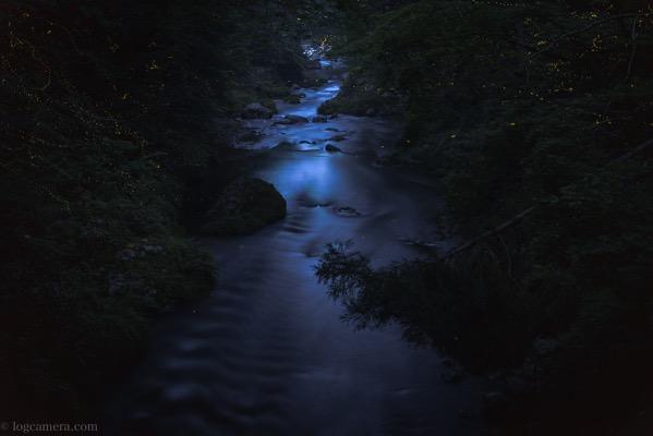ヒメボタルと渓流