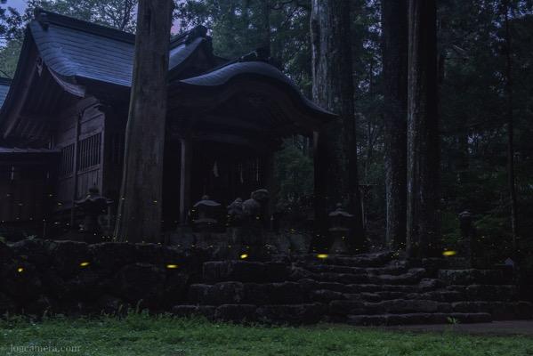 神社とヒメボタル