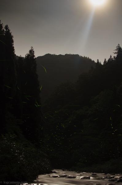 月夜のホタル
