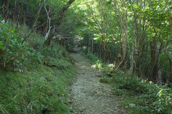 剣山 登山道