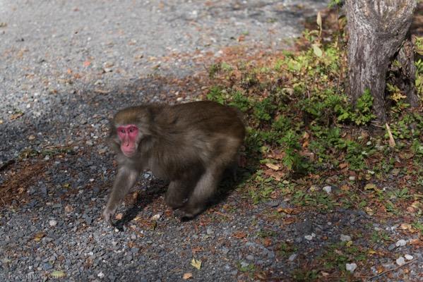 河童橋のそばの猿
