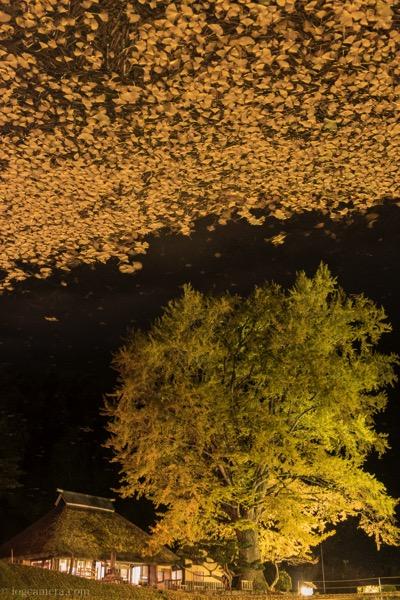 金言寺の池のリフレクション