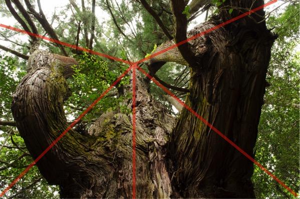 放射構図 巨木