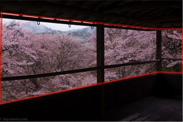 額縁構図 桜