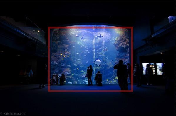 額縁構図 水族館