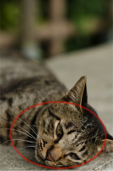 引き算の構図 ネコ