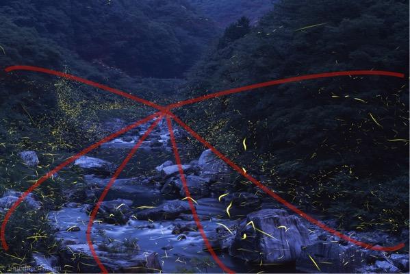 放射構図 ホタル