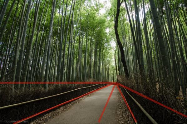 放射構図 竹林