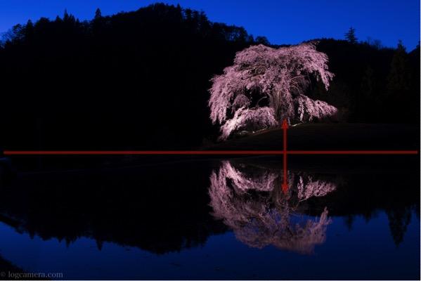 シンメトリー構図 桜