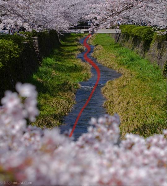 S字構図 一の坂川